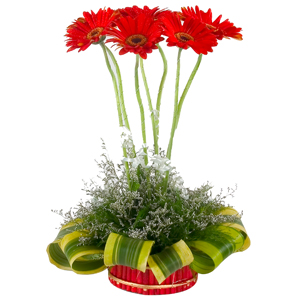 7 Gerberas Designer Arrangement to Nadiad