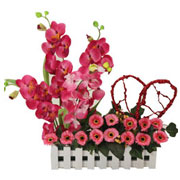 Long Lasting � Excellent Orchids n More  to Gurgaon