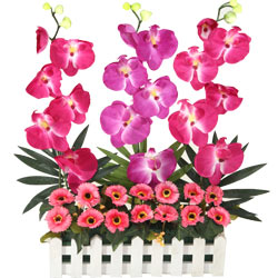 Long Lasting � Orchids Garden to Raipur