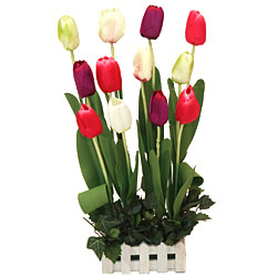 Long Lasting � Colourful Tulips to Raipur