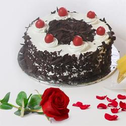 Mouth-Watering Black Forest Cake Along with a Charming Red Rose to Allahabad