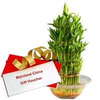 Lucky Bamboo Tree for Fathers Day with Dinner Voucher from Mainland China to Belapur Road
