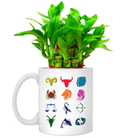 Cheerful Set of Lucky Bamboo Tree in Sun-sign Mug to Addanki