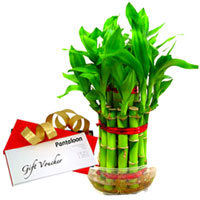 Beautiful Bamboo Plant with Pantaloons Gift Voucher to Nagpur