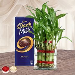 Gift of Lucky Bamboo Plant n Cadbury Chocolate to Allahabad