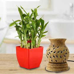 Lovely Lucky Bamboo Plant in Plastic Pot N Aroma Diffuser to Aizwal