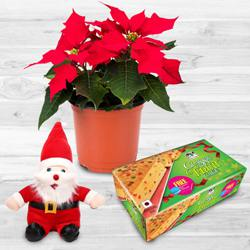 Alluring Plants Gift Combo for X-mas to Adugodi