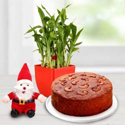 Wonderful Lucky Bamboo Plant with Plum Cake n Santa Claus Cap to Aizwal