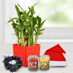 Exquisite Plant Gift Combo to Aizwal