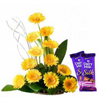 Striking Arrangement of Colorful Gerberas with Dairy Milk Silk to Mohali