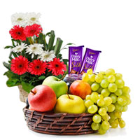 Fragrant Gerberas Arrangement with Tasty Dairy Milk Silk and Mixed Fruits Basket to Chennai