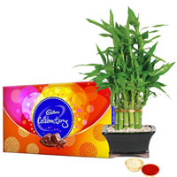 Wonderful Bamboo Plant N Cadbury Celebrations Pack to Aligarh