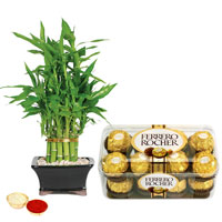 Sumptuous Ferrero Rocher Chocos N Bamboo Plant to Akola