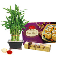 Bamboo Plant N Ferrero Rocher Chocos with Soan Papdi to Batala