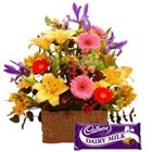 Splendid colorful Flowers along with luscious Cadburys Chocolate to Aligarh