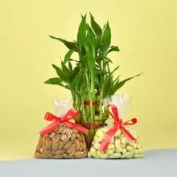 Amazing Dry Fruits N Lucky Bamboo Gift Combo on Birthday to Akurdi