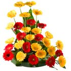 Charming  arrangement of 30 multi colored Gerberas to India