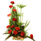 Colourful classy Carnations to Barrackpore