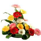 Lovely 15 colourful Gerberas to Bilaspur