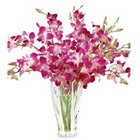 Gracefull fresh humper Orchids combined with a Vase to Vasco