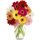 Superb arrangement of Gerberas including with a big Vase  to Rajkot