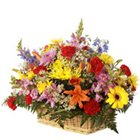 Beautiful charming fresh Flowers to Thane