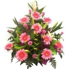 Pink Gerberas and Roses Arrangement to Ajmer
