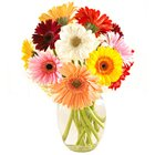 Beautiful bright Gerberas in a Vase to Coonoor