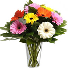 Hypnotic Arrangement of Mixed Gerberas in a Glass Vase to Jalandhar