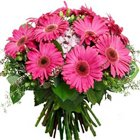 Enticing Bunch of Pink Gerberas to Udaipur