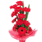 Sweet Collection of Red Gerberas to Chennai