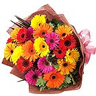 Radiant Selection of 15 Colorful Gerberas Bouquet to Bhilai