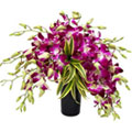 Silky-Smooth One Dozen Orchids in Glass Vase to Aurangabad
