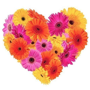 Cherished Warmth Gerberas Premium Heart Shaped Arrangement to Ambur