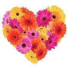 Cherished Warmth Gerberas Premium Heart Shaped Arrangement to Gorakhpur