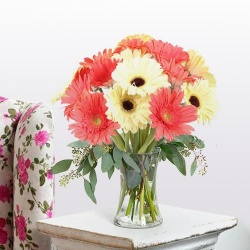 Sunny Thrive Gerbera Assemblage to Billimora