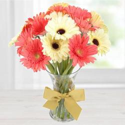 Sunny Thrive Gerbera Assemblage to Devlali