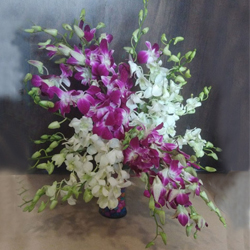 Lovely White N Purple Orchids in Glass Vase to Ahmadnagar