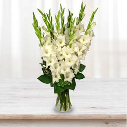Artistic Display of White Gladiolus in a Glass Vase to Agra