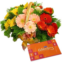 Brilliant Mixed Gerberas Basket & Cadbury Celebrations Combo