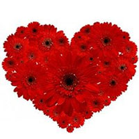 Gorgeous Heart Shaped Arrangement of Red Gerberas