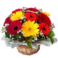 Fashionable Mixed Gerberas Basket