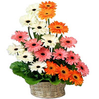 Artistic display of Colorful Gerberas in Basket