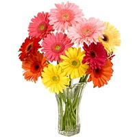 Enchanting Mixed Gerberas arranged in a Glass Vase