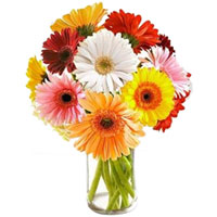 Artistic Presentation of Mixed Gerberas in a Glass Vase