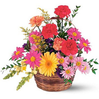 Luxurious  Basket Presentation of Gerberas with Carnations to Bangalore