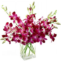 Captivating Glass Display of Orchids to Cuddapah