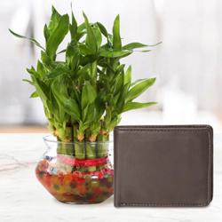 Lucky Mens Brown Leather Wallet from Rich Born with a 2 Tier Lucky Bamboo Plant for Good Luck to Adra
