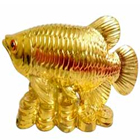 Golden Arowana Fish to Pune