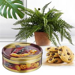 Fast-Growing Bostern Fern Indoor Plant with Cookies to India